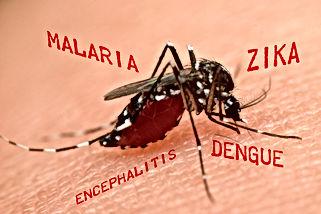 diseased mosquito, Pest Control, Pest Control Company, Pest Control Daytona Beach, Pest Control Ormond Beach, Pest Control Company Daytona Beach, Pest Control Company Ormond Beach