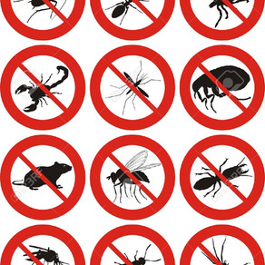 Cleaning Tips To Help Prevent Insects In Your Home