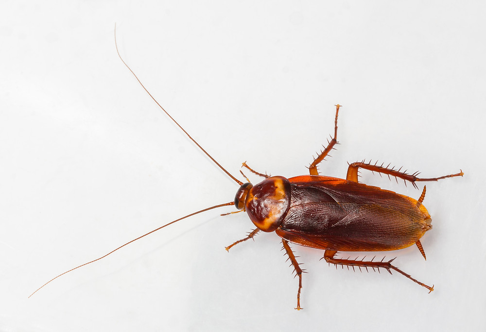 Cockroach on a floor