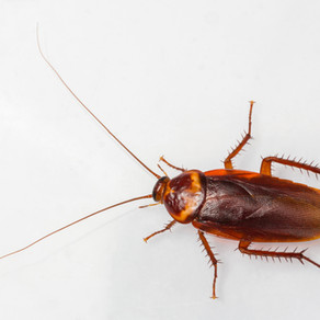 Daytona Beach Property Owners' Ultimate Cockroach Control Guide