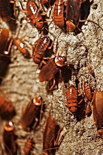 Roach exterminator Daytona Beach, Pest Control, Pest Control Company, Pest Control Daytona Beach, Pest Control Ormond Beach, Pest Control Company Daytona Beach, Pest Control Company Ormond Beach