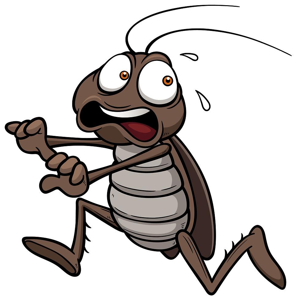 Imperial Pest Prevention Palmetto Bug Control