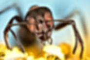 Ant pest control Daytona Beach