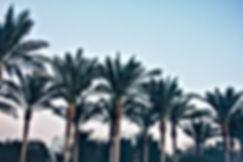 Palm Tree Spray Services