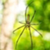 spider bananna.jpg