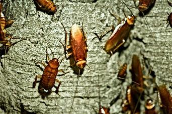 Cockroach exterminator, Pest Control, Pest Control Company, Pest Control Daytona Beach, Pest Control Ormond Beach, Pest Control Company Daytona Beach, Pest Control Company Ormond Beach