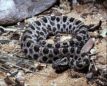 Venomous Snake, Pest Control, Pest Control Company, Pest Control Daytona Beach, Pest Control Ormond Beach, Pest Control Company Daytona Beach, Pest Control Company Ormond Beach