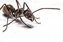 Pest Control, Pest Control Company, Pest Control Daytona Beach, Pest Control Ormond Beach, Pest Control Company Daytona Beach, Pest Control Company Ormond Beach