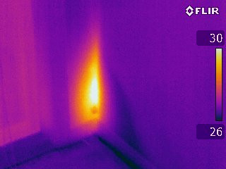 Thermal Image of Lve Subterranean Termite colony