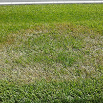 Some Of The Most Common Lawn Diseases!