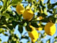 Citrus TreeSpray Services
