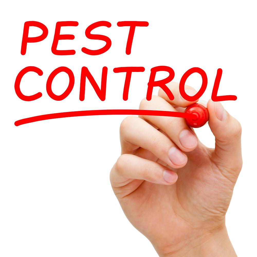 Pest Control Daytona Beach