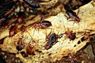Roach spray company, Pest Control, Pest Control Company, Pest Control Daytona Beach, Pest Control Ormond Beach, Pest Control Company Daytona Beach, Pest Control Company Ormond Beach
