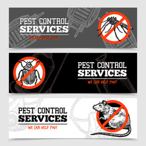 How Often Should Pest Control Be Done?