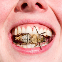 12 Bugs That Can Save Your Life In Survival!