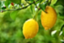 Citrus Tree Program