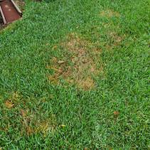 Grey Leaf Spot Fungus Treatment