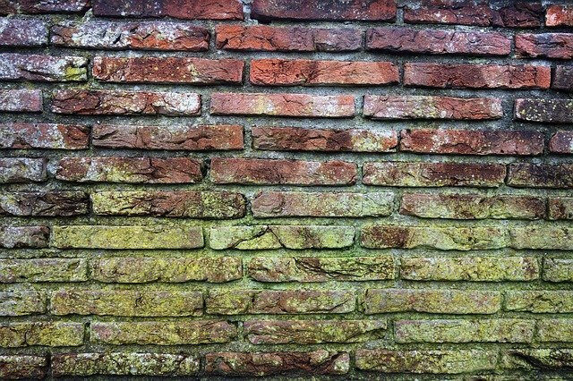 Mold Growth On a Brick Wall