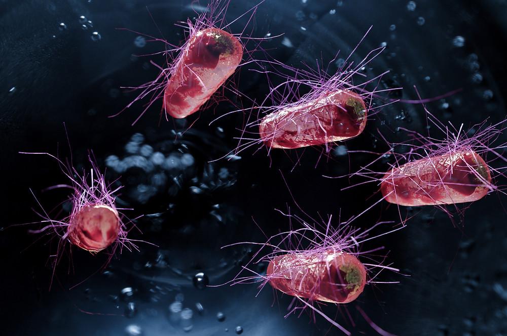Escherichia coli also known as Ecoli bacteria