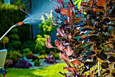 shrub spraying service Florida, Pest Control, Pest Control Company, Pest Control Daytona Beach, Pest Control Ormond Beach, Pest Control Company Daytona Beach, Pest Control Company Ormond Beach