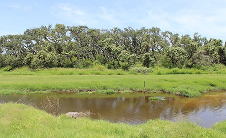 Rockport Demo Garden and Tule Marsh East