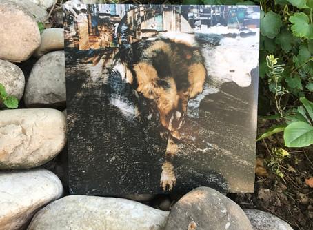 Primitive Energetics | Joe Volk & Naiare - Das Album endlich in der Hand