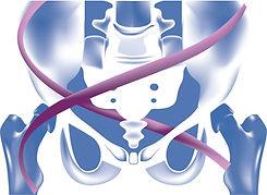Pelvis Logo.jpg