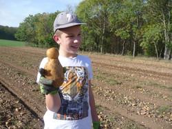 Kartoffelacker_7b_17