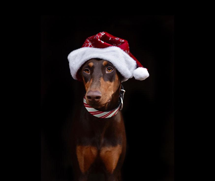 madcow christmas dog collars sadie.jpg