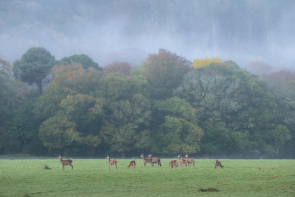 Stags at National Park 2
