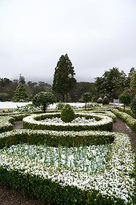 Muckross Garden snow 2