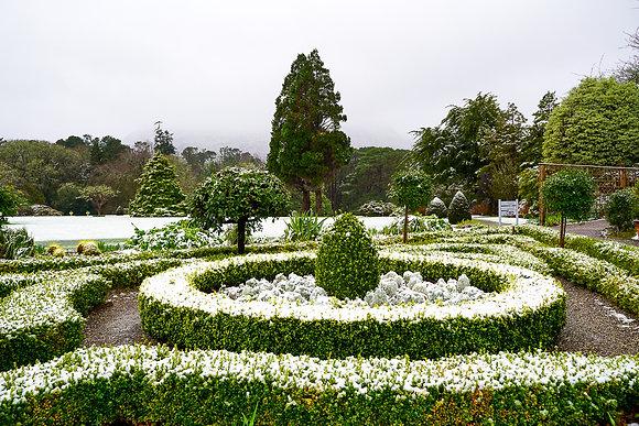 Muckross Garden snow 3
