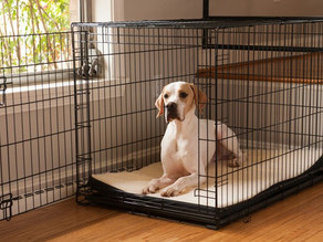 Crate Training For Dogs
