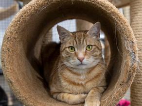 Animal Care - Tips & Tricks!