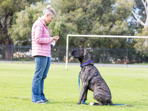 Top 5 Things To Teach Your Dog