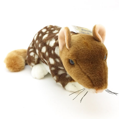 Quoll soft toy / Dotti