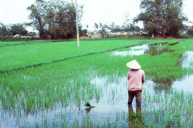 Vietnam in 35 millimeters.