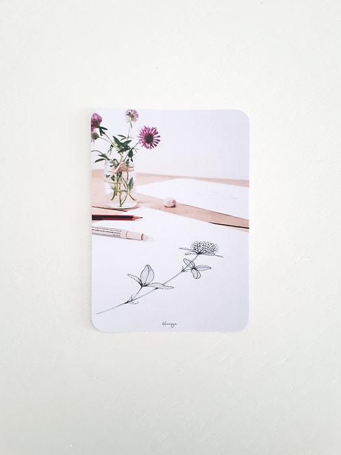 263 croquis fleur de trèfle