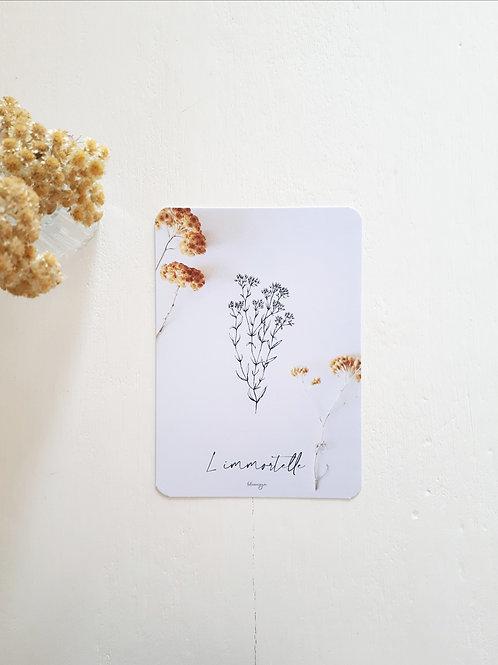 "294 fleurs "" l'immortelle """