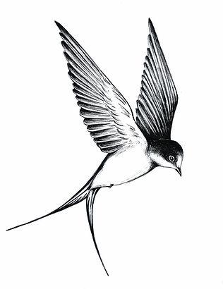Hirondelle 1 noir et blanc.jpg