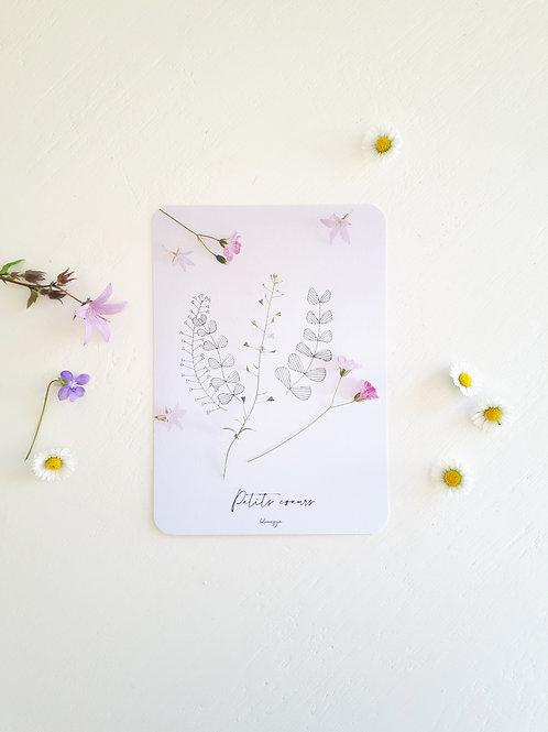 257 Petits cœurs nature