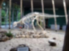 Сатаплия Скелет-динозавра.jpg