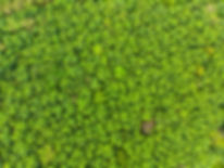 top view forest, Texture of green..jpg