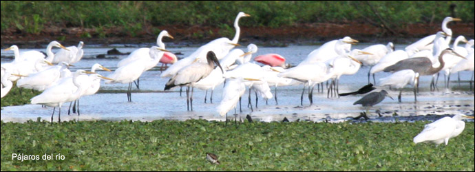 Birds of Lake Cocibolca