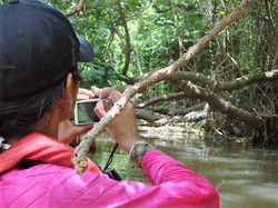Tourist taking photo of a caiman