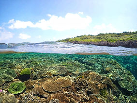 瀬底島の水中写真