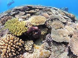 水納島サンゴの写真