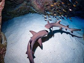 瀬底島ダイビングの様子