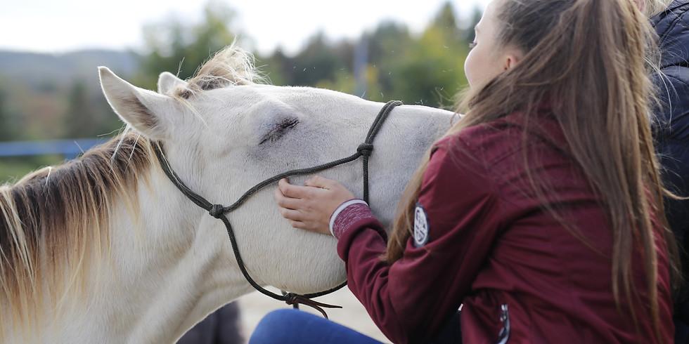 Horsemanship im Alltag