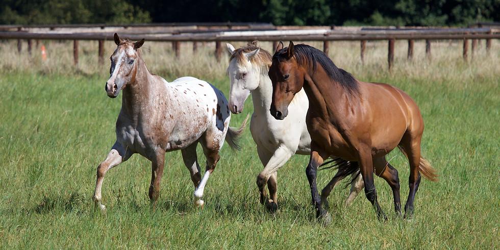 Horsenalities - Pferde lesen